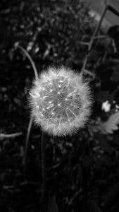 deseos frágiles y sublimes